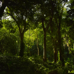 forest for feature image of mou with everfuel article